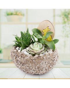 Easter Egg Rock Succulent