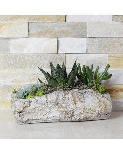 Sprouting Succulent Rock Garden