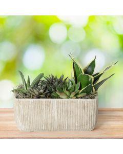 Assorted Succulent Garden