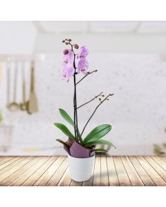 Potted Purple Orchid