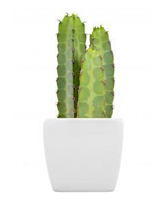The Peruvian Apple Cactus