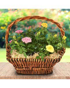 Miniature Rose Basket
