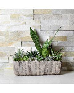 Elegant Indoor Succulent Garden