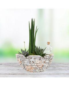 Potted Succulent Garden
