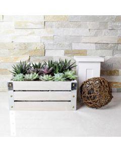 Succulent Garden Gift Crate