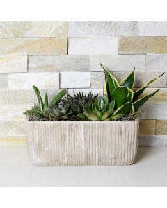 Indoor Succulent Medley