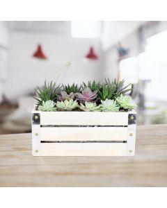 Succulent Garden Crate