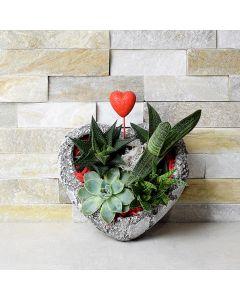 Heart Shaped Succulent Rock Garden