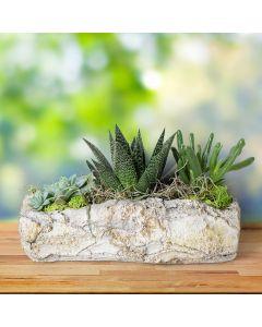 Natural Rock Succulent Garden